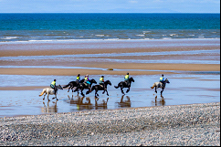 ponies galloping along a beach