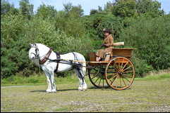 grey pony harnessed to a carriage