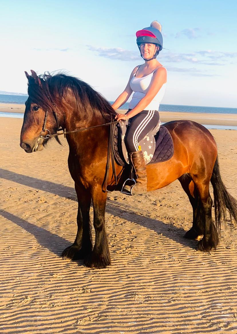 bay fell pony mare for sale