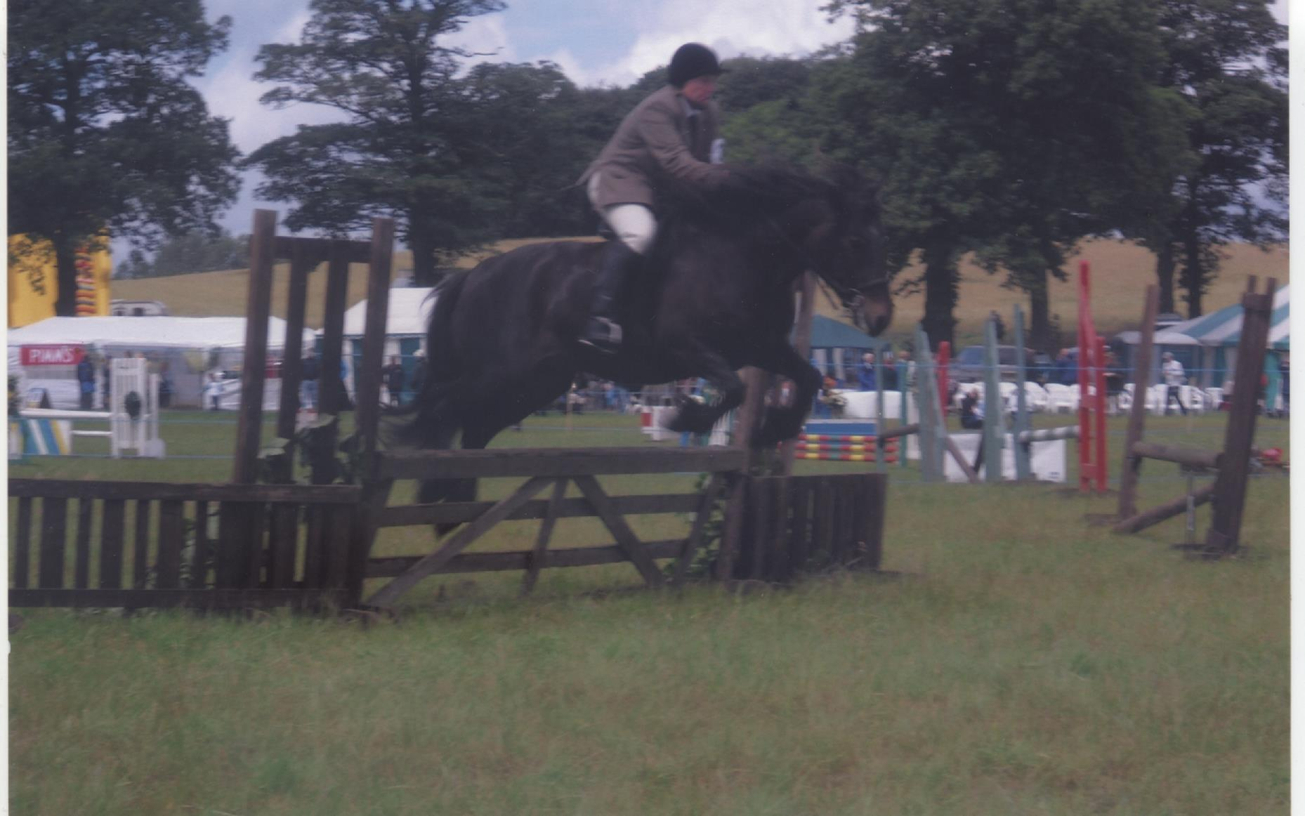 fell pony jumping a fence