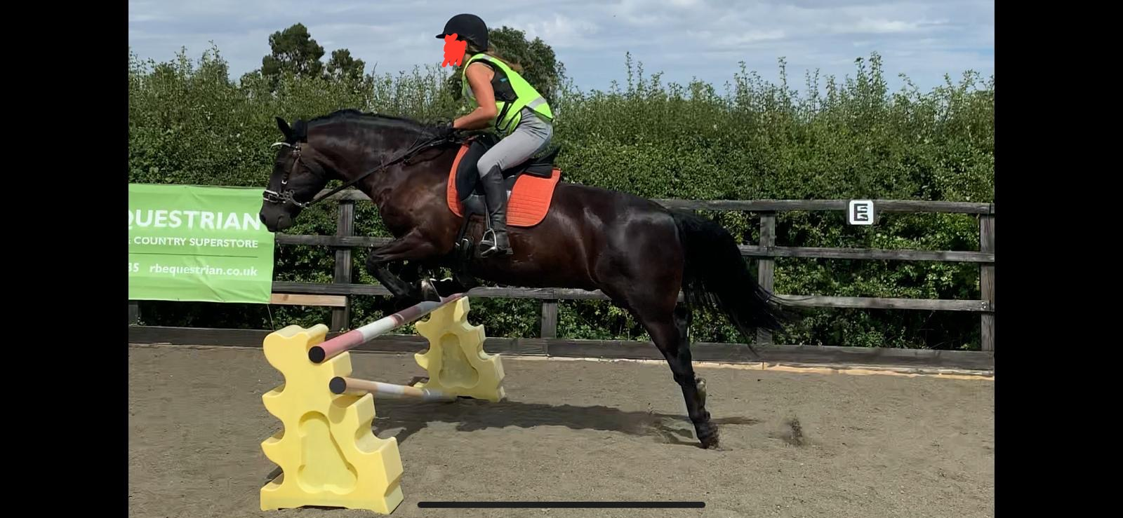 black fell pony gelding for sale, jumps