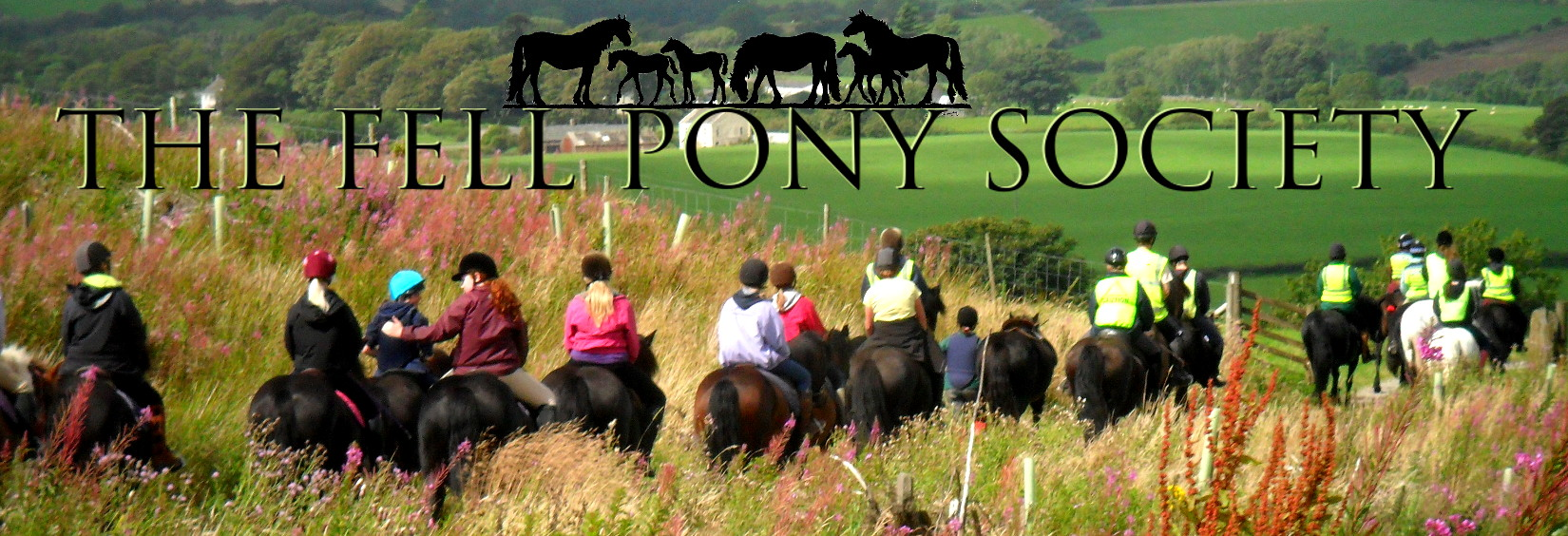 Fell Pony Society logo and images of ponies