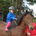 Brown Fell pony  and small child rider